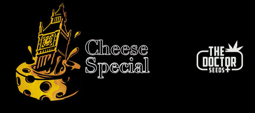 Cheese Special